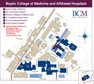 BCM_Molecular_Neurobiology_Map